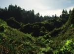 nature-alpes.jpg